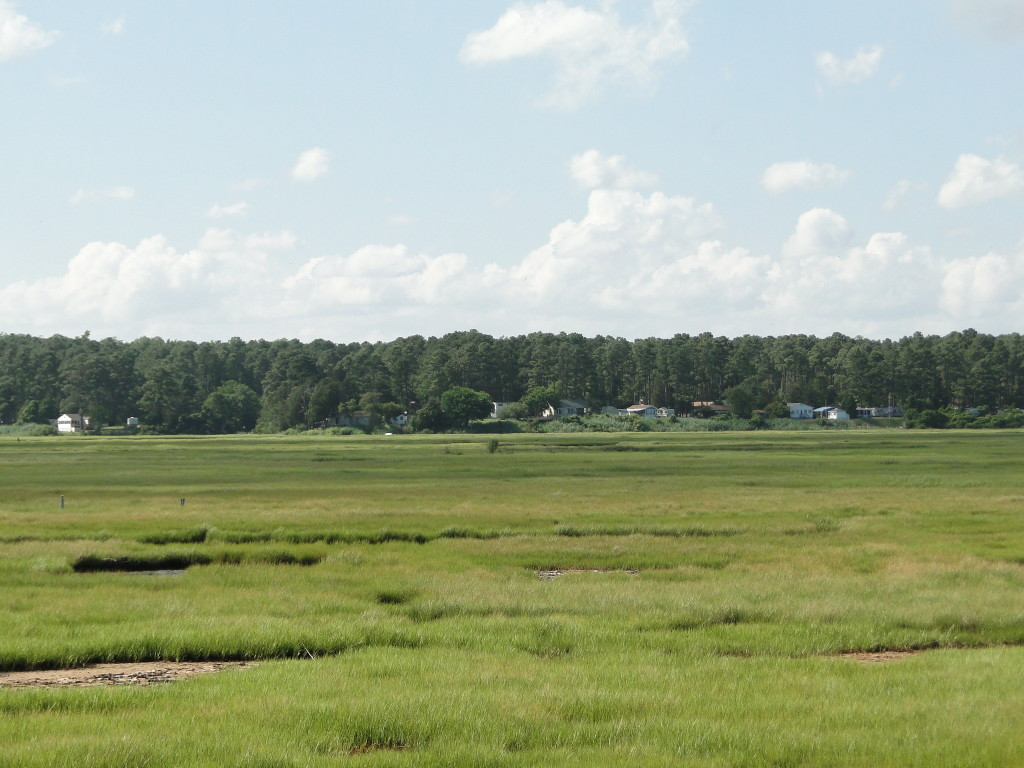 pic of Open land  Chincoteague