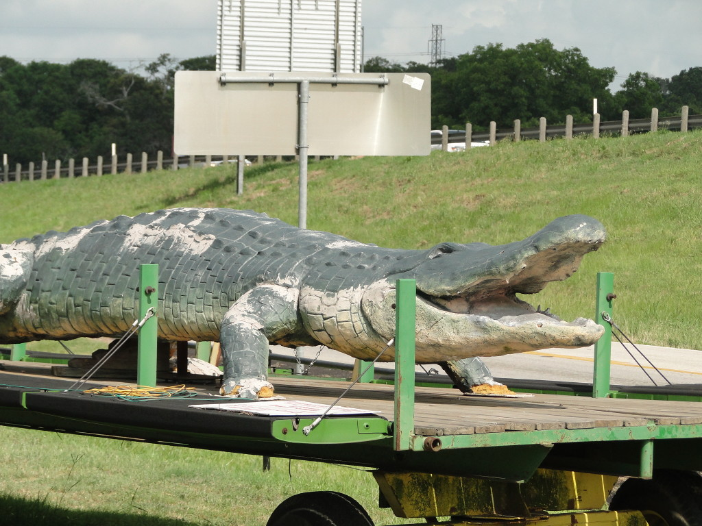 pic of fake aligator on trailer