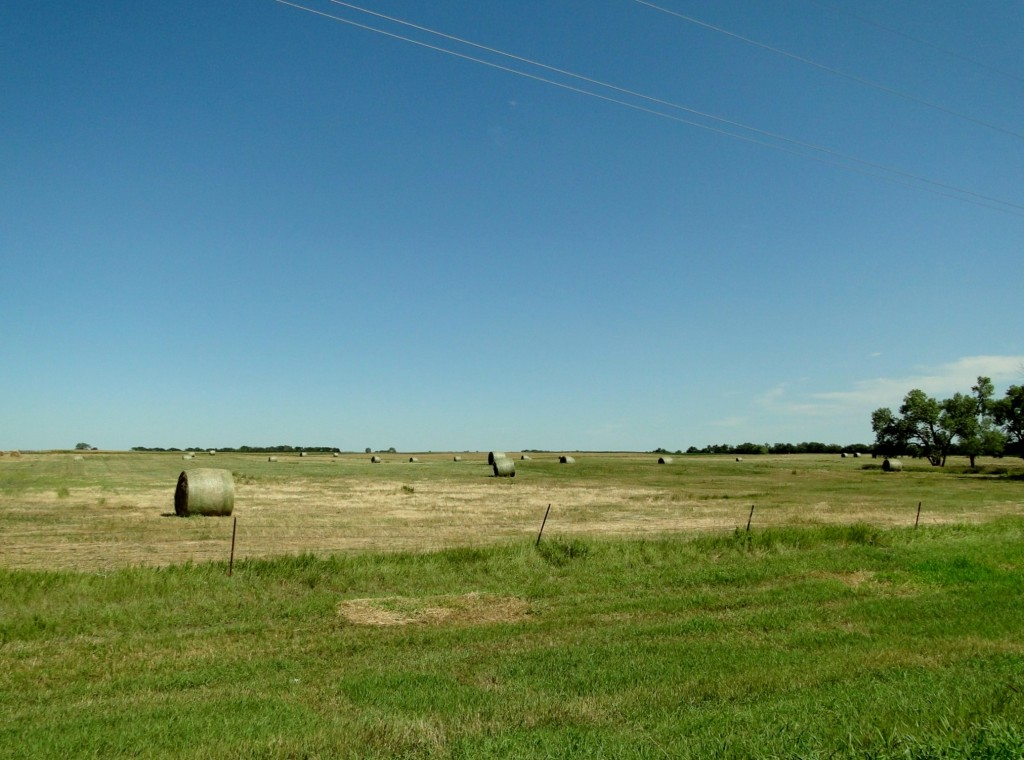 Open Plains